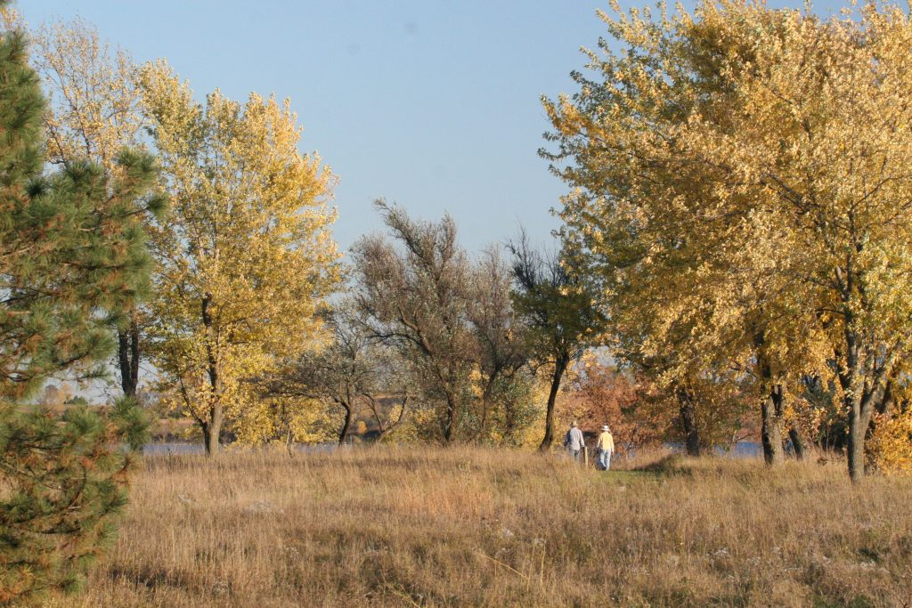 Older couple walking away through trees in fall foliage.