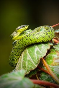 large green snake in tree